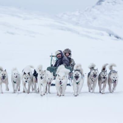 Dog sledding in Greenland. Photo by Mads Pihl