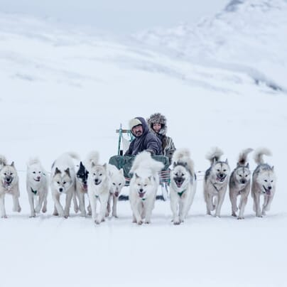 Dog sledding in Greenland. Photo by Mads Pihl